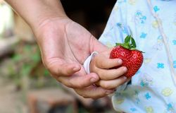 Hand gives a child red strawberries. Adult gives a child red strawberries Stock Image
