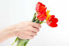 Hand gives red and yellow tulips Royalty Free Stock Photography