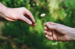 Hand gives a simple beautiful flower Royalty Free Stock Photography