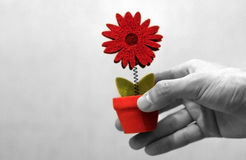 Hand giving a flower Stock Photos