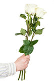 Hand giving three white roses isolated Royalty Free Stock Images