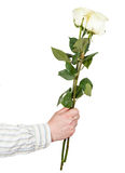 Hand giving two white roses isolated Royalty Free Stock Photos