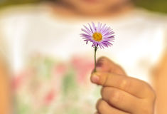 Hand giving wild flower with love. beautiful background Royalty Free Stock Photography
