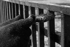 A hand in a glove brush paints a railing black and white photo Royalty Free Stock Photo