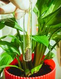 Hand in glove holding test tube with plant stock images
