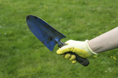 Hand in a glove holding trowe Stock Photos