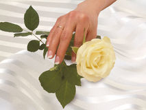 Hand with gold wedding ring and rose on white fest Royalty Free Stock Images