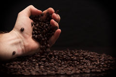 Hand grabbing coffee beans. High contrast image of hand grabbing coffee beans with some being dropped onto a pile with black background royalty free stock photos