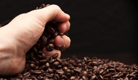 Hand grabbing coffee beans. High contrast image of hand grabbing coffee beans with some being dropped onto a pile with black background royalty free stock images