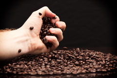 Hand grabbing coffee beans. High contrast image of hand grabbing coffee beans with some being dropped onto a pile with black background royalty free stock photo