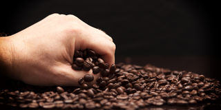 Hand grabbing coffee beans. High contrast image of hand grabbing coffee beans with some being dropped onto a pile with black background royalty free stock photography
