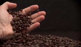 Hand grabbing coffee beans. High contrast image of hand grabbing coffee beans with some being dropped onto a pile with black background stock photo