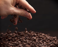 Hand grabbing coffee beans. High contrast image of hand grabbing coffee beans with some being dropped onto a pile with black background stock images
