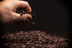 Hand grabbing coffee beans. High contrast image of hand grabbing coffee beans with some being dropped onto a pile with black background stock photography