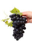 Hand with grapes Royalty Free Stock Images