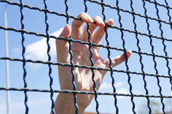 Hand grasping a metal fence. With blue sky in the background Stock Image