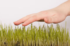 Hand and grass Royalty Free Stock Image