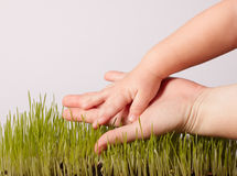 Hand and grass Royalty Free Stock Photos