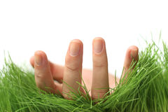 Hand in Grass Royalty Free Stock Image