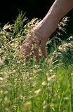 Hand in the Grass Stock Photos