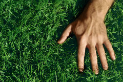 Hand on Grass Stock Photo