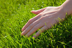 Hand with grass Stock Images