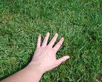 Hand on the grass. On a summer day Royalty Free Stock Photography