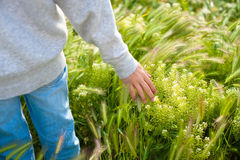 Hand on the Grass in Beautiful day, Relax Day, Relax Hand on the Grass, Hand with Sunny Day Royalty Free Stock Image