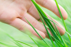 Hand on grass Royalty Free Stock Images