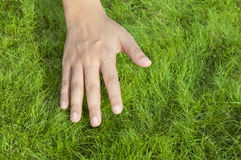 Hand on  grass Stock Images