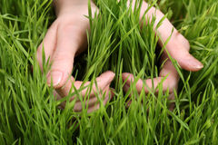 Hand and grass Royalty Free Stock Photography