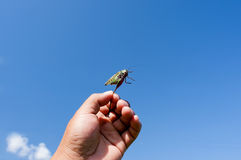 Hand and the grasshopper Stock Images