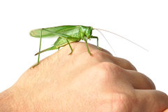 Hand with Grasshopper stock images