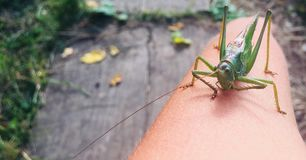Hand grasshopper stock photography