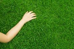 Hand on green grass. Stock Photo