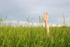 Hand in green grass Royalty Free Stock Photography