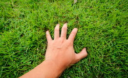 Hand in green grass Royalty Free Stock Photos