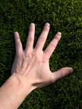 Hand on green moss Royalty Free Stock Photography