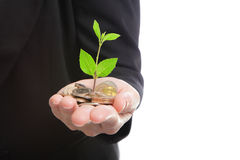 Hand with green plant growing from money Stock Images