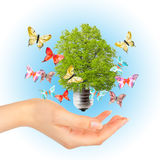 Hand and green tree in light bulb. Alternative energy concept Stock Image