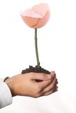 Hand ground to grow a flower Stock Photo