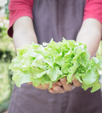 Hand on group of salad vegetable Royalty Free Stock Photo