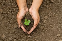 Hand grow small plant on dry soil with care royalty free stock photos