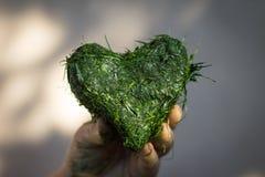 Hand hält Herz geformt vom frischen Schnittgras Lizenzfreie Stockbilder
