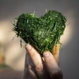 Hand hält Herz geformt vom frischen Schnittgras Stockfoto