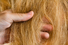 Hand of the hairdresser with the hair Royalty Free Stock Photo