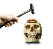The hand with the hammer hovered over the open skull with the br Royalty Free Stock Image
