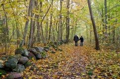 Hand - in - hand i guld- skog Royaltyfri Foto