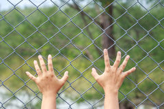 Hand hanging on metal chain link fence Stock Image