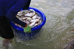 Hand hanging plastic basket of seafood Stock Image